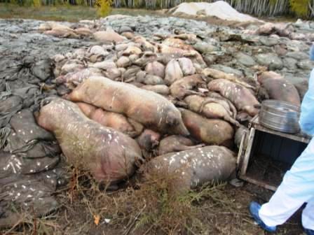 На строительство скотомогильника, который находится в собственности администрации Златоустовского