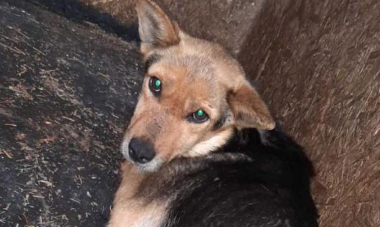 Искалеченная бездомная собака, которую