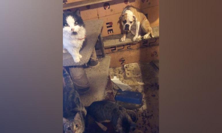 В приюте для животных «Лилин» в Челябинске произошел пожар. В огне погибли 12 кошек и один кролик