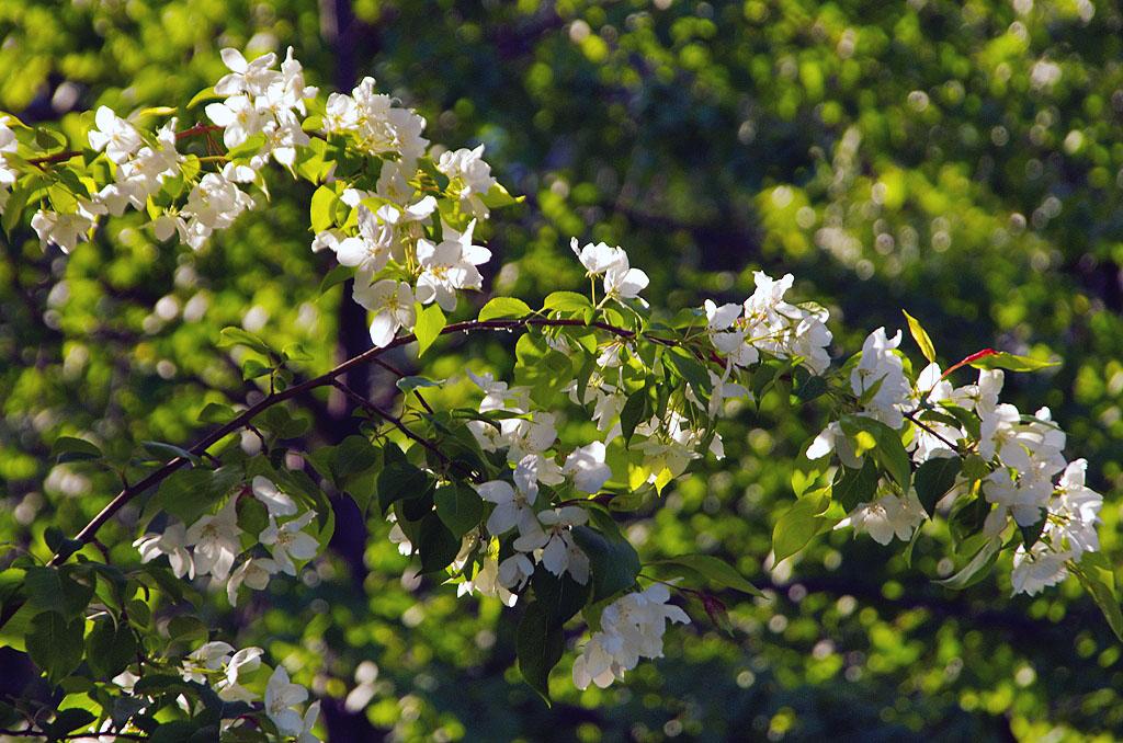 В Челябинской области зацветут «Сады Победы». Желающим поучаствовать в акции помогут получить саж