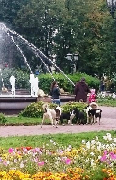 Целые своры безнадзорных собак «захватили власть» в Аше (Челябинская область). Огромные бродячие