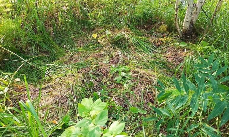 В Челябинской области инспекторы национального парка «Зигальга» случайно побывали в гостях у медв