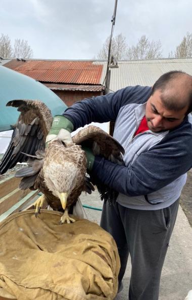 Челябинский ветеринар Карен Даллакян, руководитель центра реабилитации диких животных