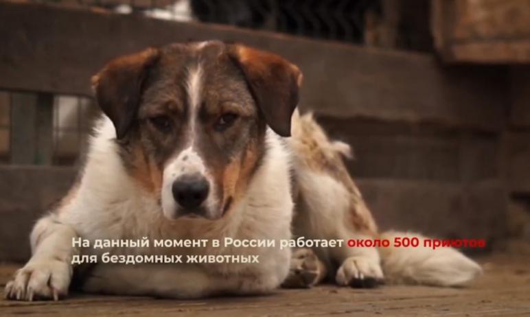 Неравнодушные челябинцы сняли социальный ролик в поддержку бездомных животных. В его создании при