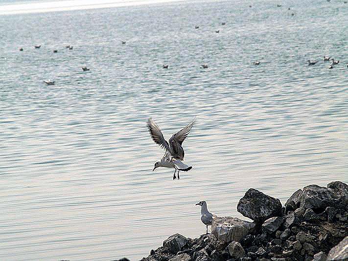 Инцидент произошел 30 июля на озере Смолино. Матросы-спасатели заметили, что с понтона в воду сп