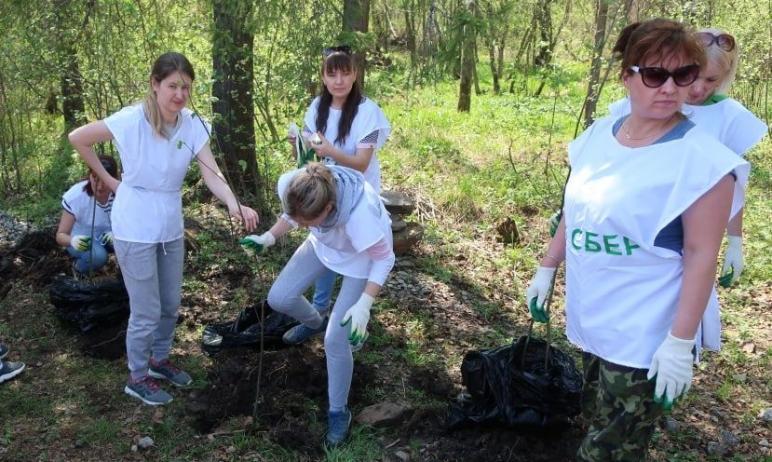 Во всероссийский День посадки леса в Центральной усадьбе национального парка «Таганай» (Челябинск