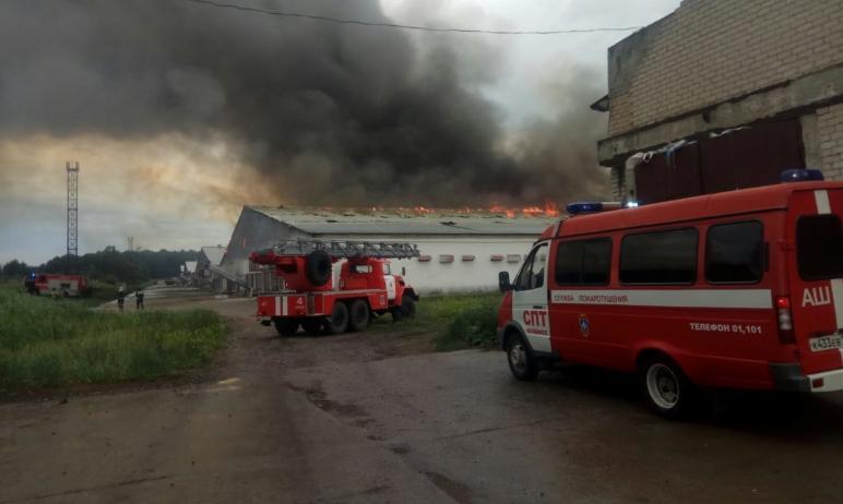 Сегодня, 17 июня, произошел серьезный пожар в одном из зданий птицефабрики «Равис» (Рощино, Сосно