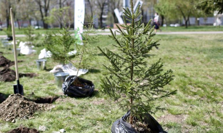 В 2021 году в Челябинской области высажено 412 тысяч деревьев в память о погибших в годы Великой