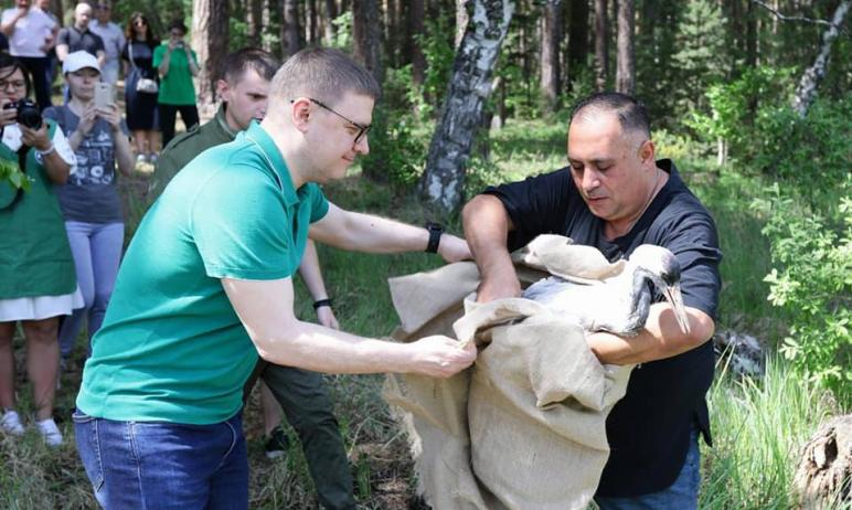 В воскресенье, 23 мая, в Челябинской области вернулись в естественную среду обитания дикие животн