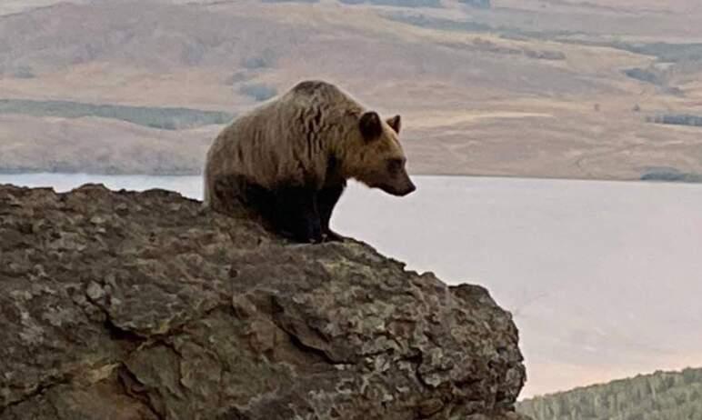 Спецоперация по спасению двух медвежат, которая была проведена в Челябинской области по поручению