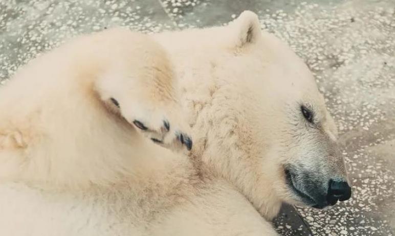 Сегодня, седьмого мая, в челябинском зоопарке пройдет долгожданное событие - «Медвежья рыбалка».