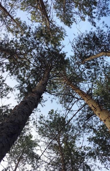 Министерство экологии Челябинской области намерено обжаловать решение Второго апелляционного суда