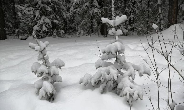 В нацпарке Таганай (Челябинская область) благодаря снегопадам и морозам медведи оборудовали берло