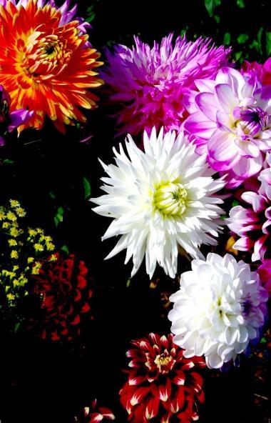 В канун Международного женского дня в Челябинскую область завезли 320 тысяч срезов цветов и 14 ты
