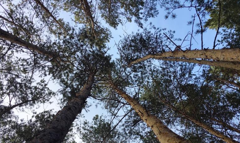 В предстоящие выходные, пятого и шестого июня, в Челябинской области ожидается облачная погода с