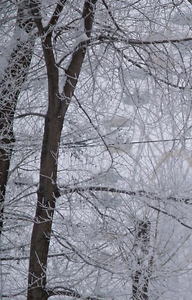 В понедельник, 10 февраля, в Челябинской области ожидается небольшой снег, местами умеренный, мет
