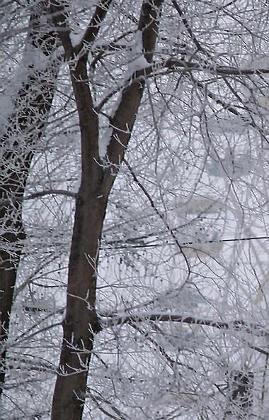 В четверг, 19 марта, в Челябинской области ожидается облачная погода с прояснением, на большей ча