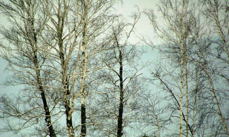 Неблагоприятные погодные условия в Челябинской области продлятся еще сутки.  По данным Ч