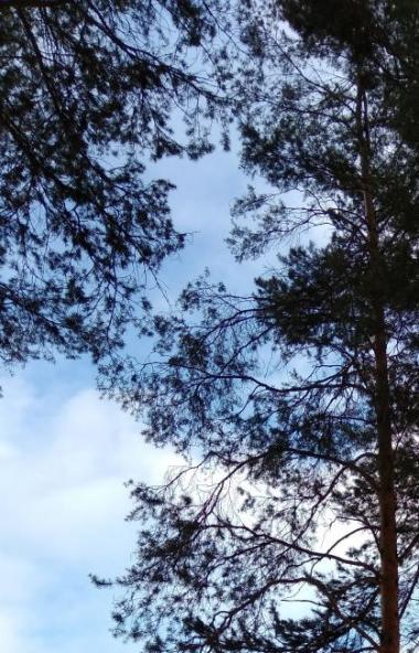В понедельник, второгомарта, в Челябинской области ожидается переменная облачность, преимущ