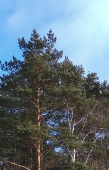 Во вторник, 25 февраля, в Челябинской области ожидается облачная погода с прояснением, днем плюсо