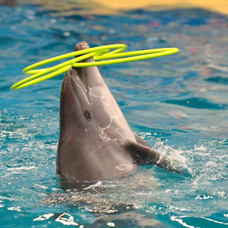 С 28 апреля в Челябинске начнёт работатьпередвижной дельфинарий. Жители города смогут стать зрит