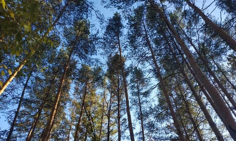В Челябинске в четверг, 21-го октября, состоялись публичные слушания по вопросу зонирования зелен