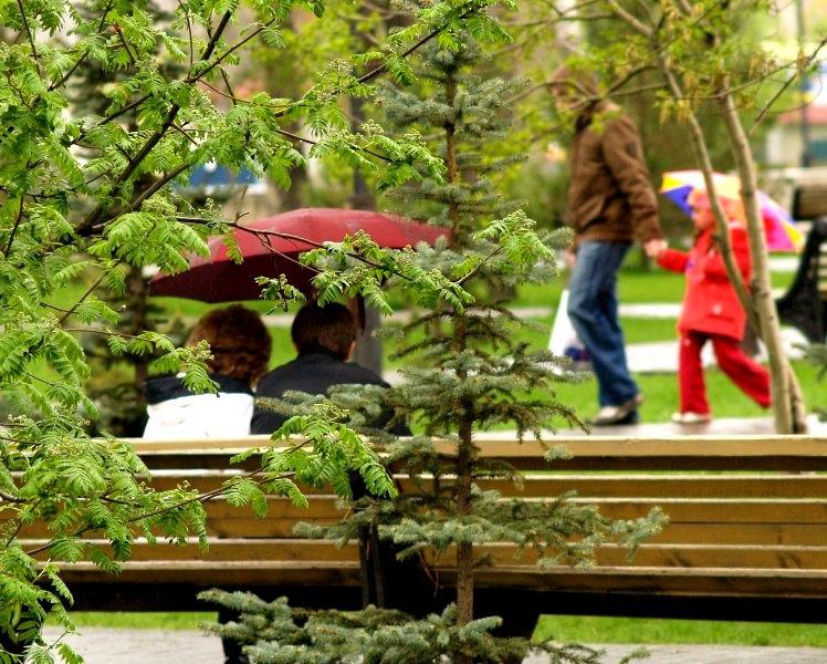 «Сейчас началась массовая высадка саженцев деревьев и кустарников, – рассказал глава Карабашского
