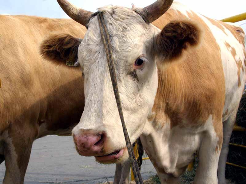 Главное открытие недавно опубликованного списка ТОП-50 производителей сырого молока от аналитиков