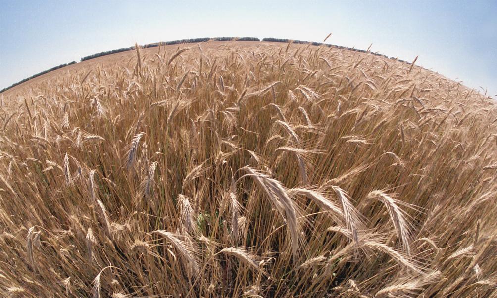Общая уборочная площадь в регионе составила 1,851 тысяч га. Урожайность зерновых и зернобобовых к