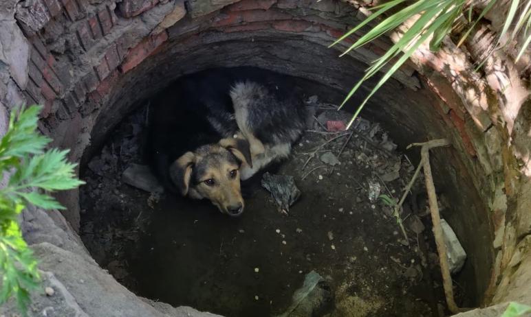 В Советском районе Челябинска в колодец упала бездомная собака. Несчастное животное не могло само