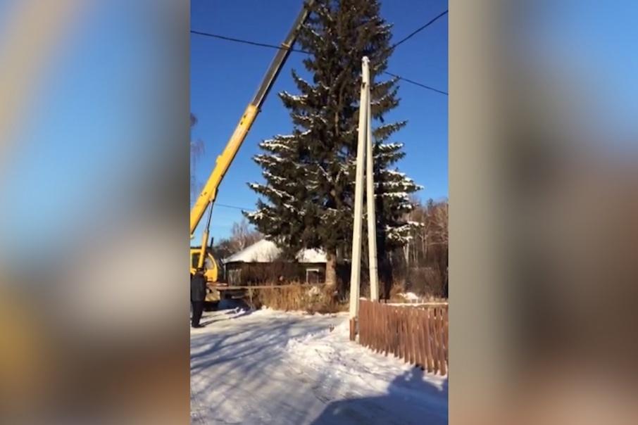 В селе Аргаяш разгорелся скандал из-за новогодней елки. Для главной площади выбрали елку, которая