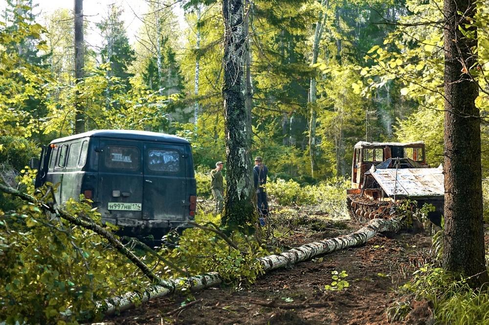 В Челябинской области жестоко вырубают хвойные леса в заповедной зоне под Ашой. Южноуральское вед