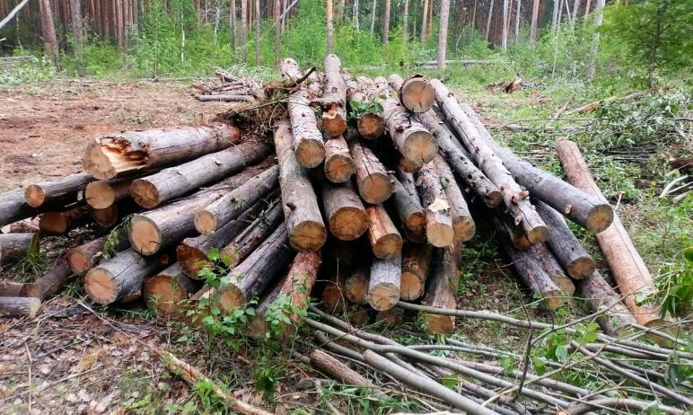 Челябинские экоактивисты обеспокоены по поводу рубки деревьев в городском бору, являющемся памятн