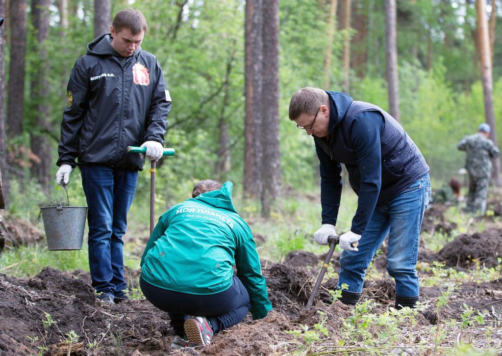 Исполняющий обязанности губернатора Челябинской области Алексей Текслер посадил молодые сосенки в