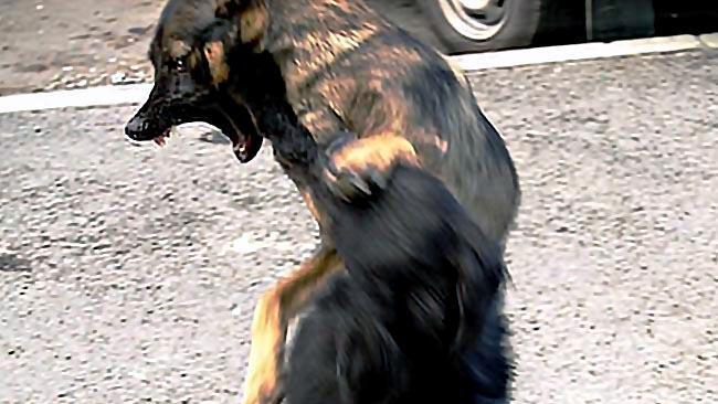 На территории муниципального образования ветеринары обнаружили не менее трех зараженных бешенство