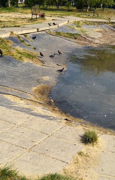 Удручающее состояние пруда в городском сквере Еманжелинска (Челябинская область) огорчает местных