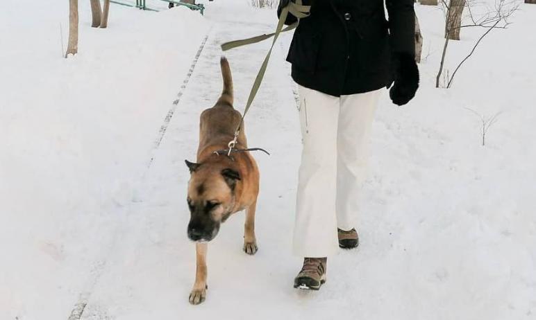 Новый возможный поворот событий наметился в судьбе пса Грея, которого хозяйка в январе этого года