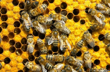 Комитет Государственной думы по аграрным вопросам отклонил законопроект фракции КПРФ «О пчеловод