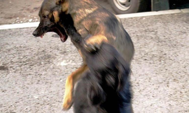 В четырех населенных пунктах Челябинской области введен карантин по бешенству животных – в Златоу