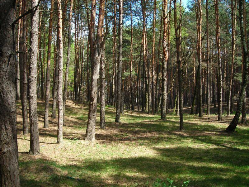 Кроме того, управлению жилищно-коммунального хозяйства Челябинска дано пор