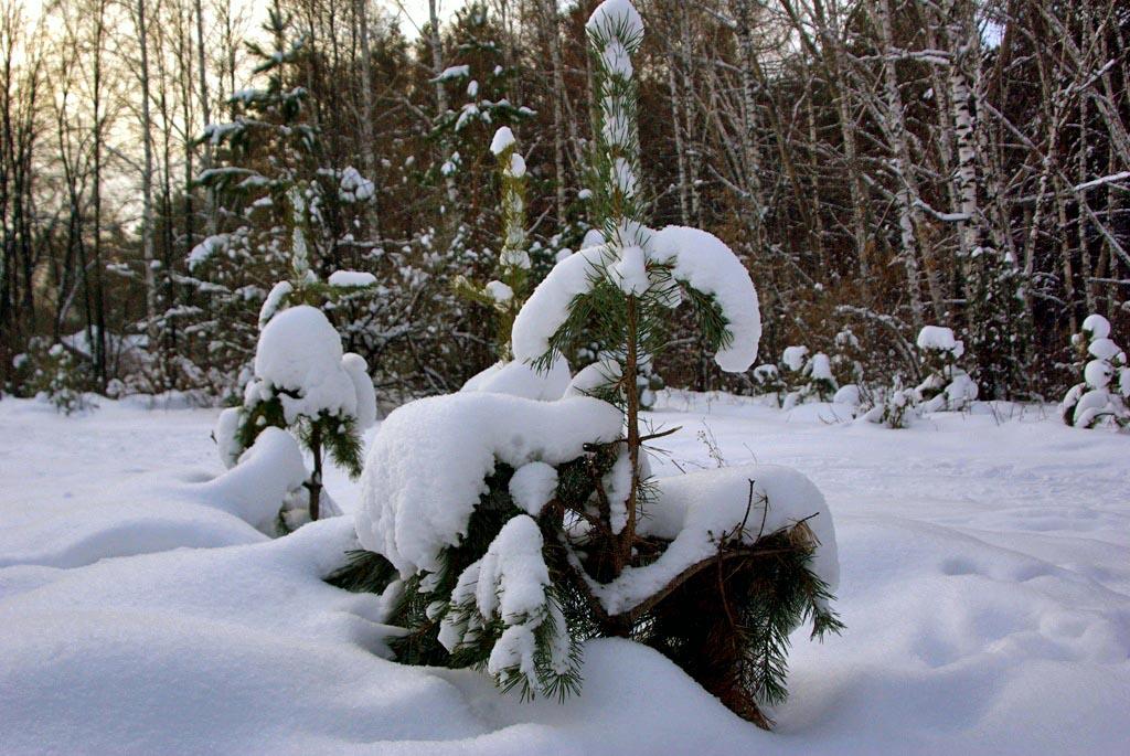 Миасские спасатели несколько дней искали пенсионерку – осмотрели все лесные тропки