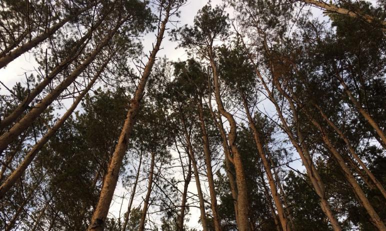 Второй апелляционный суд города Санкт-Петербурга удовлетворил ходатайство юриста-эколога, правоза
