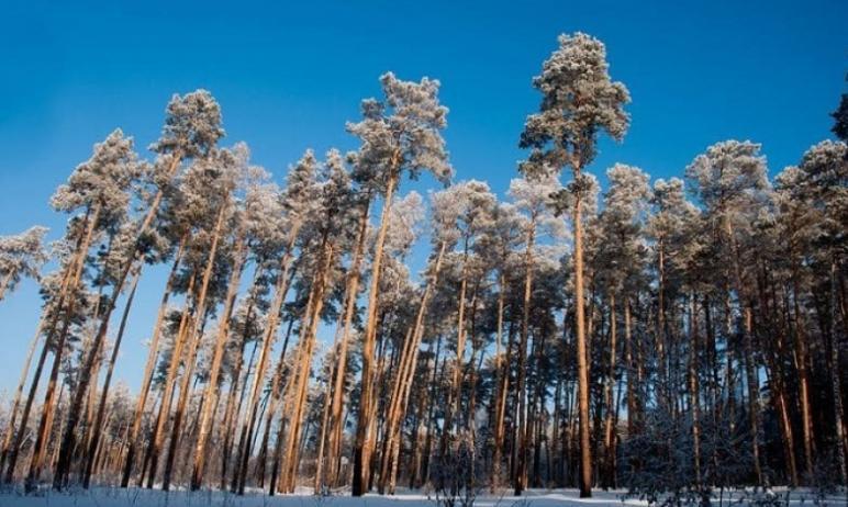 Заместитель министра экологии Челябинской области Виталий Безруков, комментируя информацию о заст