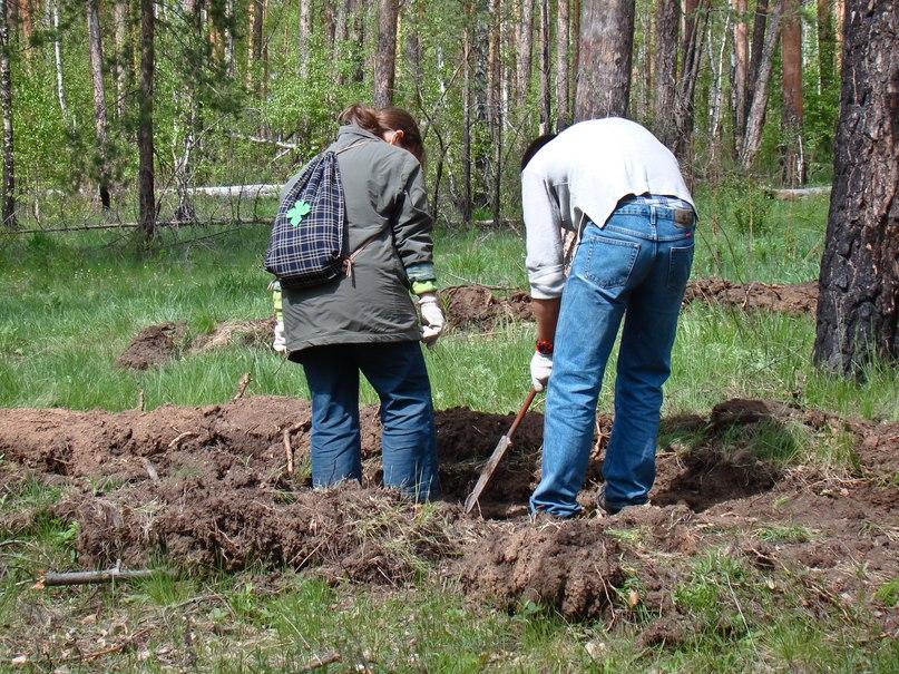 В Челябинской области приступили к весенним работам по посадке леса. Общая площадь посадки лесных