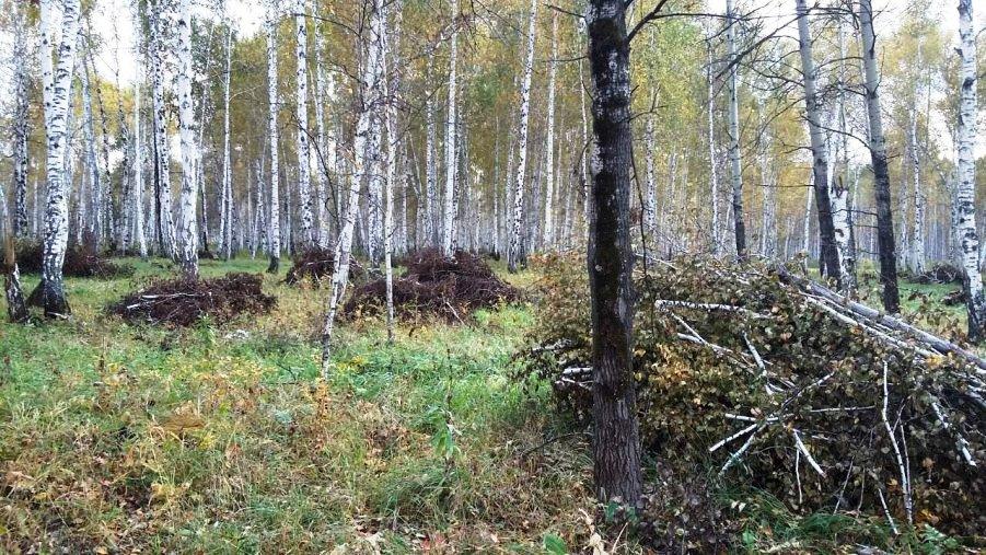 Как сообщили агентству «Урал-пресс-информ» в пресс-службе ОНФ, около деревни Шибаново «черные лес
