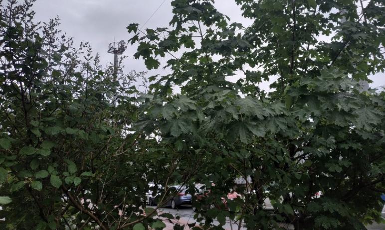 На северо-западе Челябинска снесут 343 дерева, часть из них будет пересажена.  О предсто