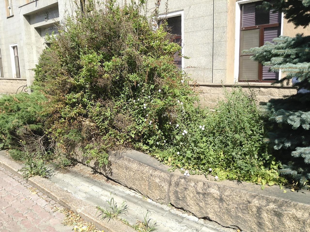 Администрацию Челябинска атаковали гигантские сорняки. Общественники требуют, чтобы чиновники при