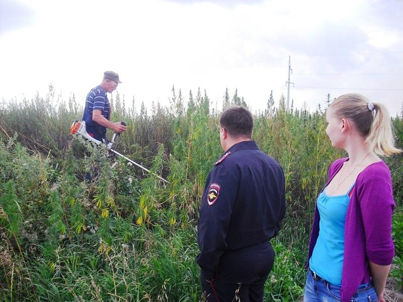 Как сообщили агентству «Урал-пресс-информ» в ГУ МВД по Челябинской области, с травой, служащей сы