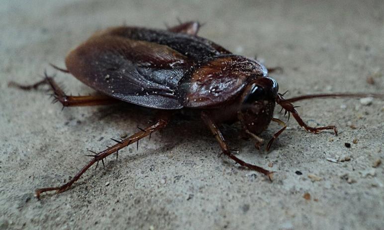 В Миассе (Челябинская область) к стихийному продуктовому рынку приближается армия тараканов.