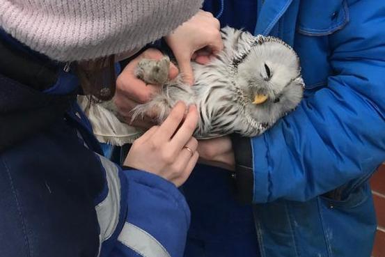 В Челябинске сегодня, первого апреля, в международный день птиц, развернулась операция по спасени